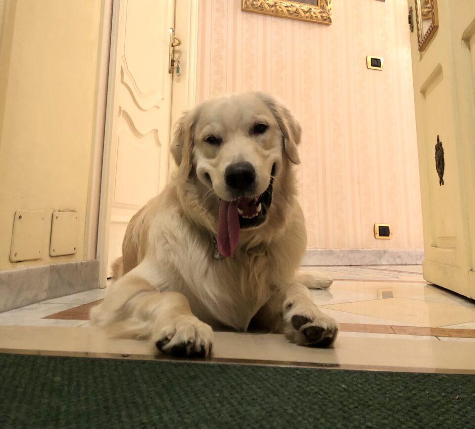 """Qui da noi gli animali sono i benvenuti! ZAR, membro del nostro team con qualifica di """"addetto all'accoglienza"""", ne è la prova!"""